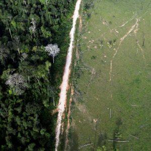 Facebook prohíbe el uso de sus plataformas para la venta de tierras protegidas de la Amazonia